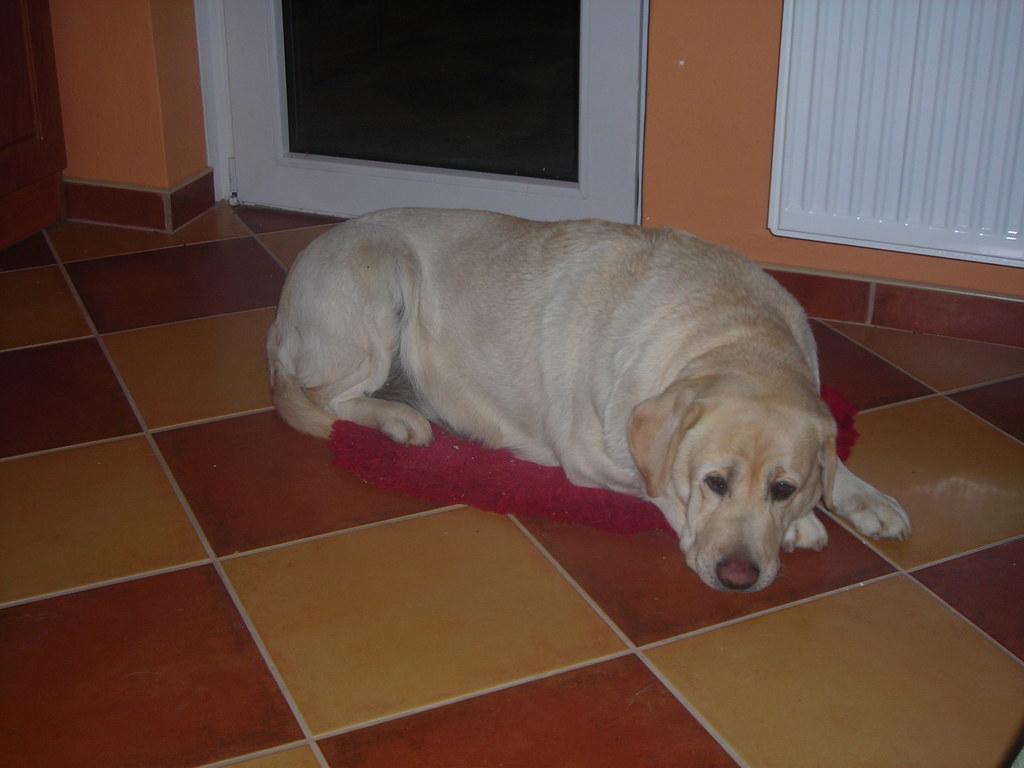 Pihenés a konyhában