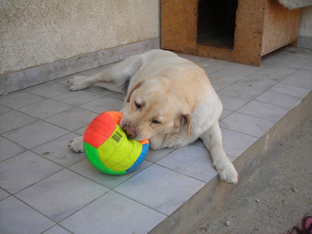 Az elmaradhatatlan labdával